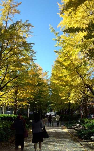 明治座前の銀杏並木